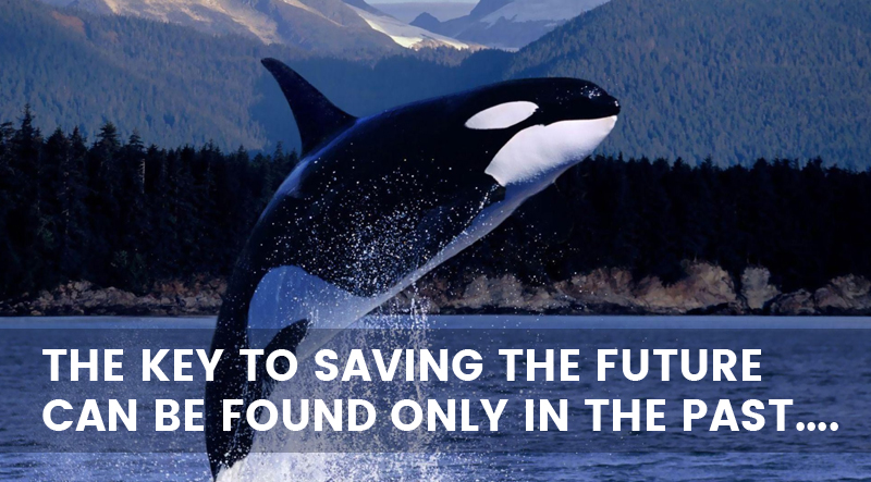 #SaveTheWhales: How does saving the whales can bring any good to a retail business?